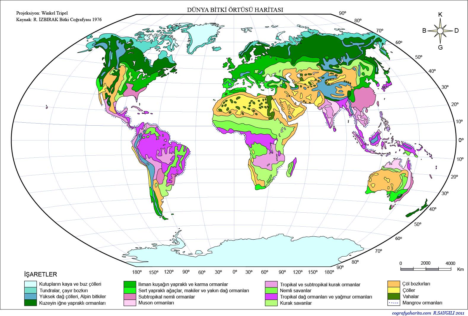 Bitki Örtüsü Haritası