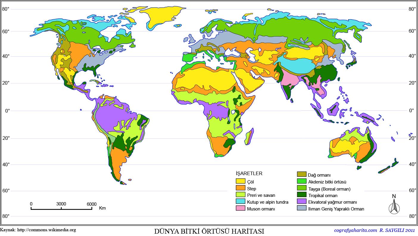 Bitki Örtüsü Haritası 2