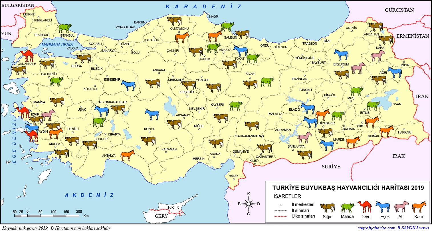 Türkiye Büyükbaş Hayvancılık Haritası
